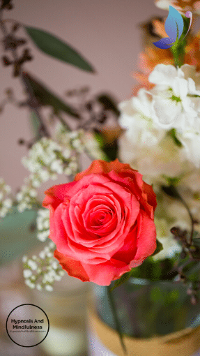 red fresh rose in vase, social distancing